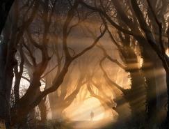 20个梦幻神奇的树隧道