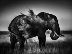 Laurent Baheux非洲野生动物摄影欣赏