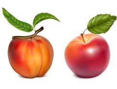 4种逼真水果矢量素材