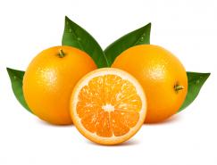 美味橙子矢量素材
