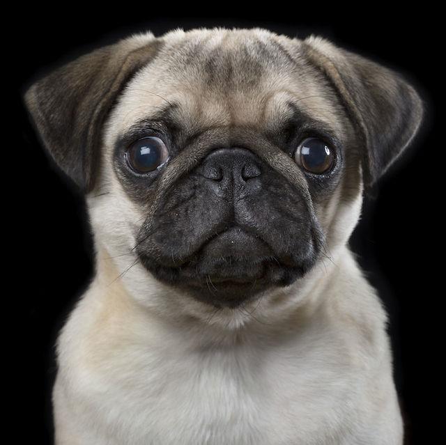 bahou动物肖像摄影