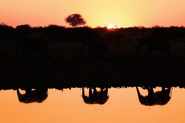 Ian Plant漂亮的自然和动物摄影欣赏
