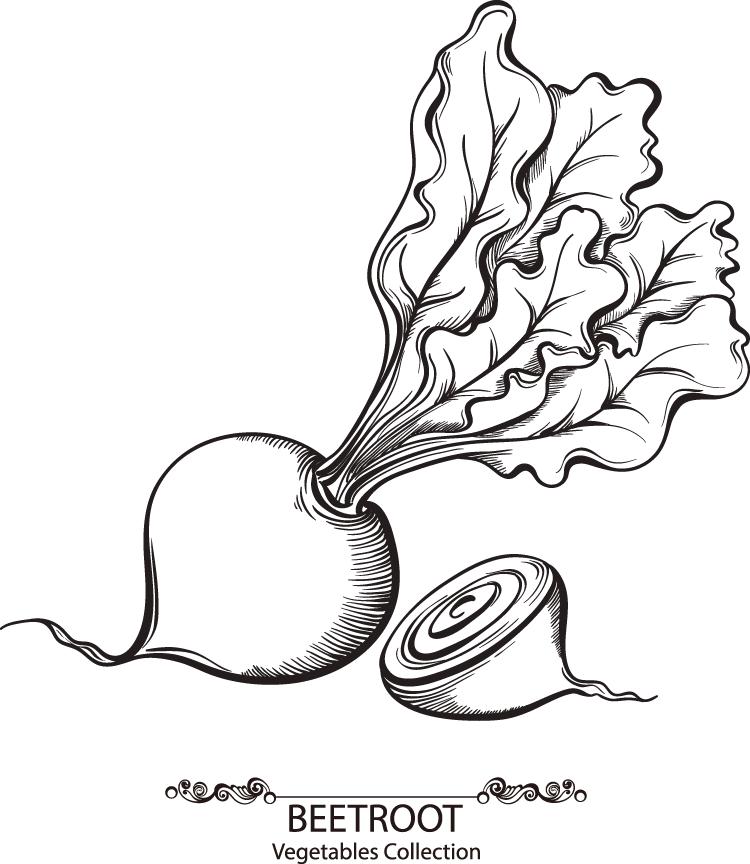 手绘蔬菜系列:红菜头矢量素材