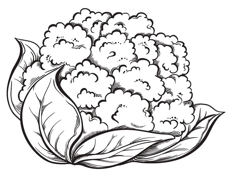 手绘蔬菜系列:花菜矢量素材