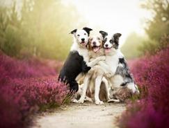 Alicja Zmysłowska可愛的狗狗攝影作品