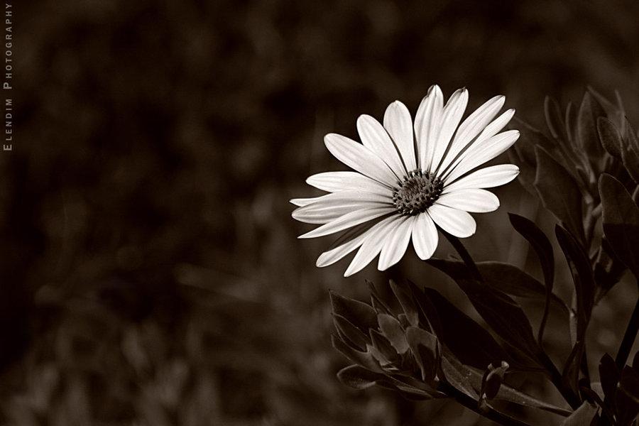60张漂亮的花朵和花卉摄影