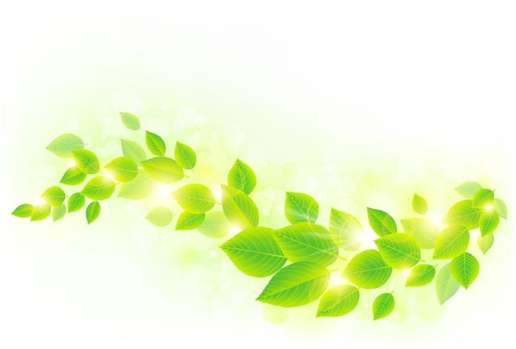 春天阳光和绿叶矢量素材