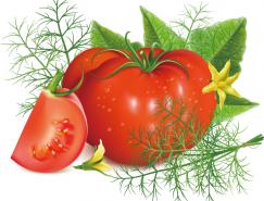 新鲜的西红柿矢量素材