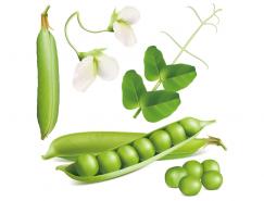 新鲜豌豆矢量素材