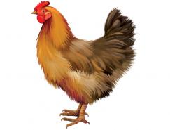 公鸡矢量素材