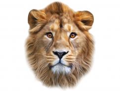 狮头矢量素材