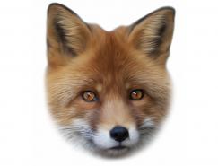 逼真的狐狸头像矢量素材