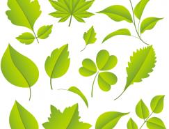 各种绿色树叶矢量素材