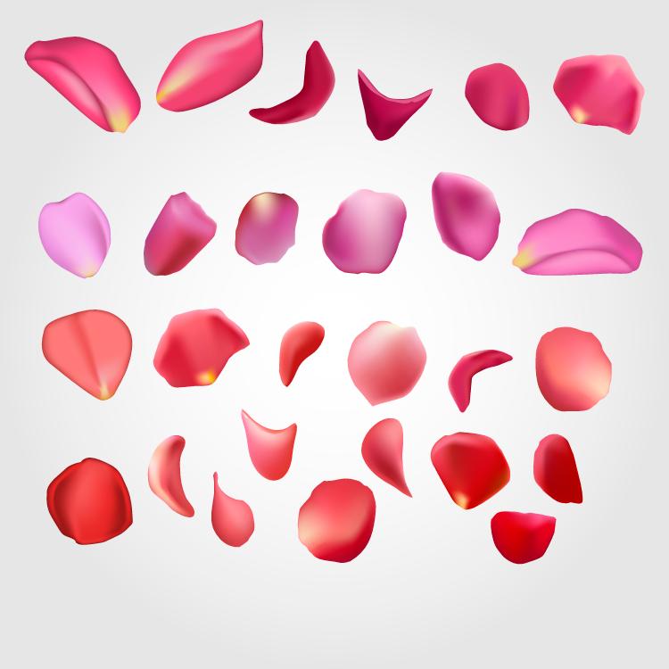 各种精美花瓣矢量素材图片