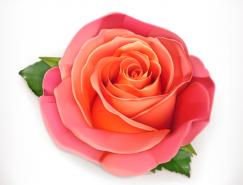 漂亮的玫瑰花矢量素材