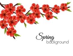 漂亮的红花背景矢量素材
