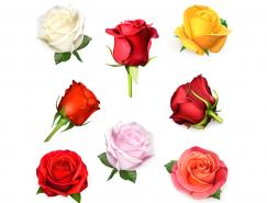8个不同色彩的玫瑰花矢量素材