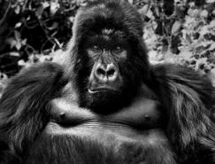 David Yarrow黑白动物肖像摄影作