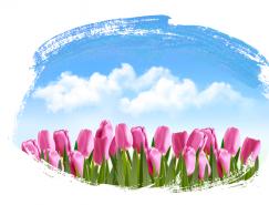 蓝天白云下美丽的郁金香矢量素材