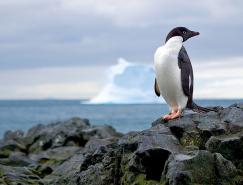 20张野生动物摄影作品精选