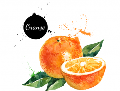 手绘水彩橙子矢量素材