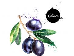 手绘水彩橄榄矢量素材