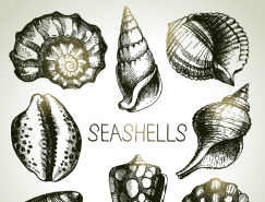 8种手绘贝壳矢量素材