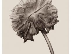 德国摄影师Bettina Güber:花朵美丽的褶皱