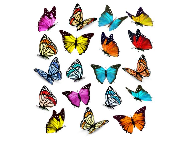 美丽的蝴蝶矢量素材