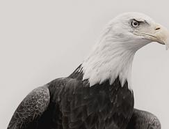 Troy Moth黑白动物肖像摄影