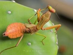 28张精美的昆虫微距摄影作品