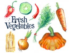 手绘新鲜蔬菜矢量素材(2)