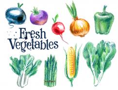 手绘新鲜蔬菜矢量素材(3)