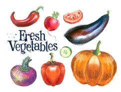 手绘新鲜蔬菜矢量素材(4)
