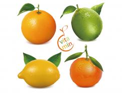 新鲜的橙子和柠檬矢量素材