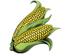 玉米矢量素材