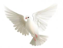 白鸽矢量素材(2)