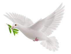 白鸽矢量素材(3)