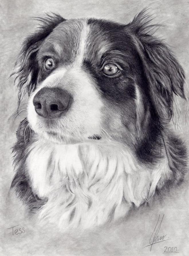狗的绘画图片大全大图_狗的绘画图