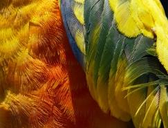 Thomas Lohr亚洲城最新网址作品:鸟类羽毛的迷人特写