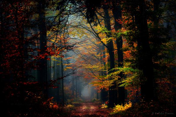 Nelleke Pieters漂亮的森林摄影欣赏