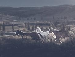 野马之美:Troy Moth摄影作品欣赏