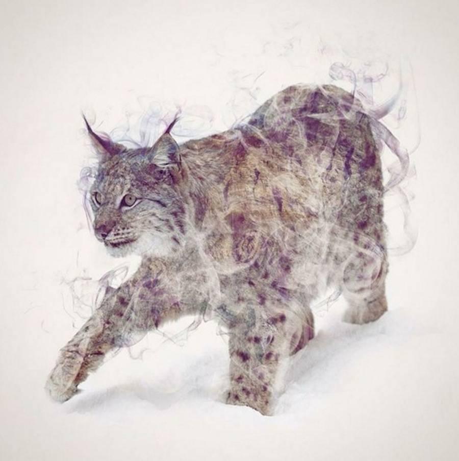 dániel双重曝光的动物画像