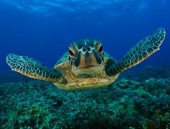 22张海龟桌面壁纸欣赏