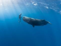 美丽如画的水下世界:摄影师水下与海洋生物和谐