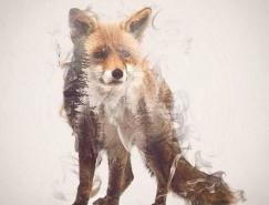 摄影和插画结合:Taylor Dániel双重曝光的动物画像