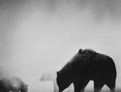Elicia Edijanto静谧的人与动物黑白水彩插画