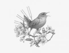 Denise Nestor精细黑白动物插画欣赏