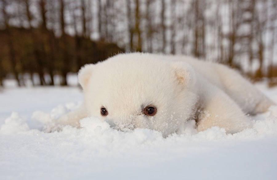 可爱北极熊宝宝v宝宝图片欣赏海豚加速器怎么加速杀手6图片