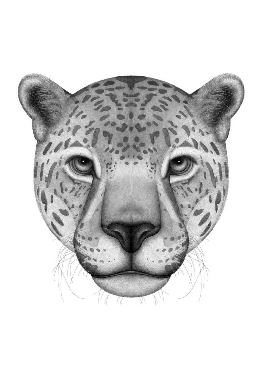quillet逼真的动物肖像画作品(2)